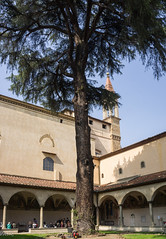 An ancient cedar in the cloister of the convent of San Marco. Florence 2014 (Tiigra) Tags: city travel italy tree tower art church museum architecture garden painting florence bell spire tuscany column cloister 2014 arka