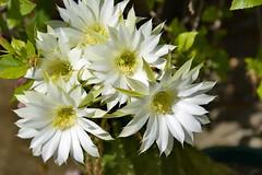 2014-02-22_10-27-41 (J Rutkiewicz) Tags: cactus flower flora kwiaty kaktus