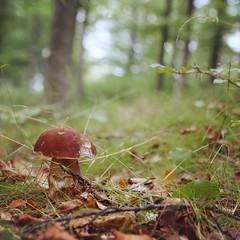lugn och ro i skogen (Cecilia Adolfsson) Tags: nature forest square bokeh squareformat skog rise svamp karljohan iphoneography instagramapp