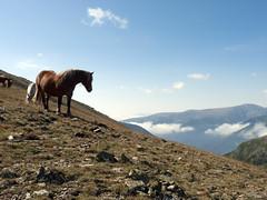 Horse with a view! (Keith Kingston) Tags: horse mountain france trek de peak keith kingston dor pyrenees coma puig