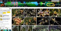 43,000 Images, 22nd September 2014 - IDENTIFYING AUSTRALIAN RAINFOREST PLANTS,TREES and FUNGI Flickr Group (Black Diamond Images) Tags: screenshot rainforest 43 2014 43000 rainforests australianflora australiannativeplants australianplants rainforestflora rainforestplants rainforestplant australianrainforest arfp australianrainforests australianrainforestplants identifyingaustralianrainforestplants idrainforestgroupmilestones australianrainforestflora arfmilestone treesandfungigroup idrainforestgroup rainforestidentification comment72157606451416793databasesab 2292014 43000images 000thimage