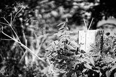 2014-09-26-Mutter-75-Geburtstag-20140927-121524-i188-p0053-_Bearbeitet1239-ILCE-6000-35_mm-.jpg
