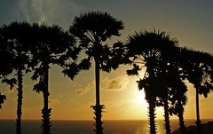 Phuket Sunset 02 (brentflynn76) Tags: travel trees sunset sky sun holiday beach water silhouette clouds skyscape landscape thailand photo scenic palm cape phuket promthep