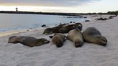 Galapagos - San Cristobal-35