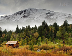 Cabin in the Woods (Jason Branz) Tags: trees winter house snow mountains tree ice cabin fallcolor rustic sierranevada hopevalley