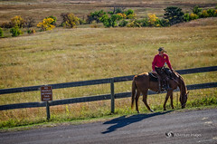 _RWB7305-Edit.jpg (Ron '53) Tags: horse southdakota unitedstates custerstatepark fairburn
