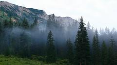 Wald (ecker) Tags: trees mountain nature berg fog forest austria nebel natur wald morgen steiermark styria morgens morgennebel waldrand fruh osterreich baume