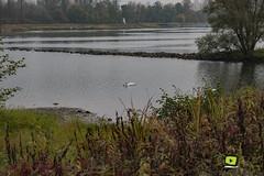 Sortie_photos_13_11_2016-6 (valdu67photographie) Tags: 2016 alsace automne basrhin eau faune rhin