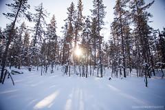 IMG_2682 (F@bione©) Tags: lapponia lapland marzo 2017 husky aurora boreale northenlight circolo polare artico rovagnemi finalndia finland