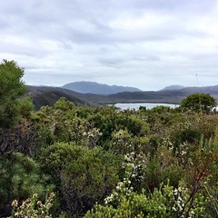 On Balmoral Hill. Bathurst Harbour. Port Davey, Tasmania.