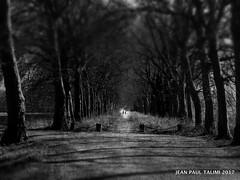 Sentinelles (JEAN PAUL TALIMI) Tags: arbre appoigny talimi texture noiretblanc nature deux rue bourgogne horizon arbres personnages chemins monochrome matiere noiretbalnc solitude