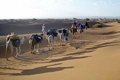 Small Caravan (Bergfex_Tirol) Tags: bergfex marokko morocco desert sahara berber dromedar dromedary caravan karawane
