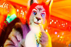 _MG_0717 (Tiger_Icecold) Tags: confuzzled cfz2016 cf2016 furcon furry convention fursuit birmingham party deaddog ddp deaddogparty