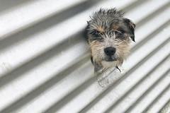 En Puerto Natales / Chile (CarolinaCalquin) Tags: carolina calquin fotos photos puerto natales region magallanes patagonia chilena chile travel viajes turismo perro dog