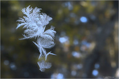 Winter Designs (Lindaw9) Tags: frost design window trees blue sky macro 28c march cold northern ontario