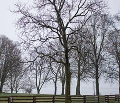 Bony Spring Trees, 2017 (marylea) Tags: apr6 2017 spring snow trees farm fence snowfall earlyspring stark grayskies mist rural danhoeyfarm washtenawcounty michigan