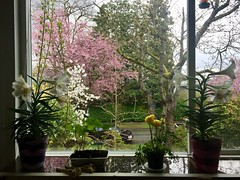 Home sweet home (Pierre♪ à ♪VanCouver) Tags: vancouver spring window fenêtre finestra 窓 ventana janela printemps primavera 春