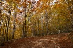 Autumn (Goran Joka) Tags: autumn fall foliage leaf color autumncolors wood trees trail path nature landscape outdoor