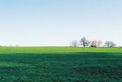 Oxleas Meadow (2) (Matthew Huntbach) Tags: oxleas se9 meadow fujisuperia200 eltham