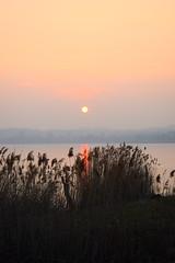 Tramonto tra i canneti (LikeTheHitter) Tags: sunset cane thicket tramonto canneti sólsetur sefi olnedgang sivene solnedgång vassen coucher de soleil roseaux sonnenuntergang röhricht καλαμώνεσ ηλιοβασίλεμα