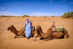 Sahara guide (Klas-Herman Lundgren) Tags: morocco northafrica sahara desert šken guide sand camel mhamid blue orange öken