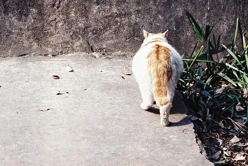 杭州的貓. 之江校貓. Kodak VISION3 250D/5207. 135. #135film #35mm #135 #35mmfilm #kodak #kodakfilm #film #5207 #250d #Leica #konica #hexar #cat #lovecat #kodakvision3 #hexarrf #city #citylife #life #filmcamera #filmphotograph #filmphotography #filmphotographer #fi