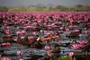 (Bantamgirl) Tags: redlotuslake thailand lake lotus blossom udon thani water pink flowers
