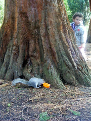 Can_u_see_what_I_see (Bruce Stokes) Tags: coombeabbey coventry squirrel jaffa
