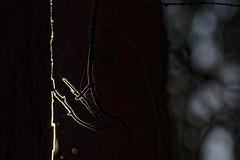 Backlit abstraction (Michal Hajek) Tags: d5500 nikon 55300mm czphoto czechrepublic nature backlit