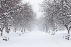 Washington Park Snow (no3rdw) Tags: washington park snow snorwstorm winter albany ny albanyny