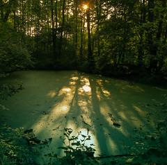 a wee swamp (Gaspare Cubolo) Tags: swamp murky arturówek bagno las
