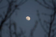 Moon through the trees (ArtGordon1) Tags: evening moon themoon night walthamstow london england uk davegordon davidgordon daveartgordon davidagordon daveagordon artgordon1