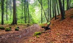 Ilse Fog Bank sun (tim.lee Rookie Photograph) Tags: wald wood tree trees green foggy sunlight sunrays weg natur nationalpark naturschutz naturschutzgebiet nikon7100 nebel landschaft light timleerookie timlee nikon wood ilsetal harz