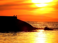 Watching the Sunset (photo fiddler) Tags: gulls birds breakwater peggyscove sunset april 2017