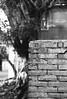 馬祖新村_13 (Taiwan's Riccardo) Tags: 2016 taiwan bw 135film negative plustek8200i kodakdoublex5222 slr contax137md zeisslens planar fixed 50mmf17 cymount 桃園縣 馬祖新村 中壢 龍岡