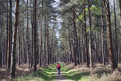 Thetford Forest [101/365 2017] (steven.kemp) Tags: thetford forest bike cycle woods trail trees highlodge