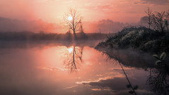 tree (Florian Grundstein) Tags: sunrise sunset tree nature pure cloudscape skyscape landscape water reflection real dream misty morning lake mystic