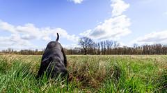 Vogel Strauß (Andie Wandsch) Tags: piwo hund dog animal haustier labrador schwarz strassenhund buddeln landschaft himmel sky