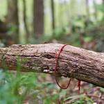 Red ribbon and fly thumbnail