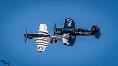 Class of '45 (lpd5358) Tags: sunnfun airshow florida lakeland klal lakelandlinderregionalairport airplane warbird northamericanp51dmustang p51d quicksilver f4u4 corsair vought koreanwarhero