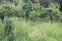 IMG_6113 (Pablo Alvarez Corredera) Tags: burro gato gata gallina rural medio vida hierba alta pradera praderio espigas arbol arboles burrito orejas orejitas gatita