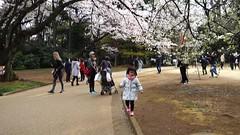 00002 (leeyu_flickr) Tags: 日本 賞櫻 親子行 東京 escape travel 旅遊 御苑 貓仔 晨希 希希 girl 幸宜