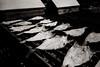 Salt cod (efo) Tags: bw film fish cod dry dried mysticseaport connecticut fed zarya voigtlander snapshotskopar