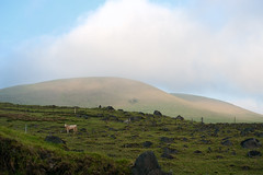 Tetas (Geoff Sills) Tags: clouds hills mountains farm round hill agriculture sunset landscape cow field kohala mountain road ireland scotland nikon d700 70200 vr 28g geoffrey william sills geoff illumeon digital illumeondigital