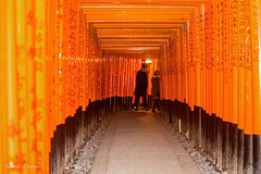 Temple Fushimi-Inari (penn.sara) Tags: instagramapp square squareformat iphoneography uploaded:by=instagram ludwig japan photography photo photographer fotografia trip temple world pray life walk streetphotography streetphoto kyoto