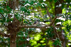 Titmouse ! (backup1940) Tags: titmouse sony hockleytexas bird
