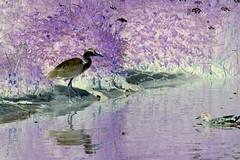 Heron Inversion (D.B.Ph0t0graphy07) Tags: nature heron reflections inversion