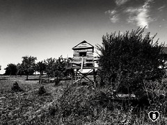 IN THE STEIGERWALD IN FALKENSTEIN #Steigerwald #forest #treehouse #Baumhaus #cow #Kuh #wagon #blackandwhite #schwarzweiß #Photographie #photography (benicturesblackwhite) Tags: blackandwhite treehouse baumhaus steigerwald photography schwarzweis cow forest photographie wagon kuh