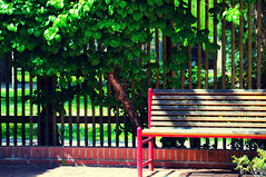 "Day 114/365 - ""Fence"" (Little_squirrel) Tags: 365the2017edition 3652017 day83365 24mar17 fence green red greenandred nature relax bench sunshine outdoor atmosphere spring"