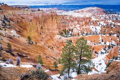 Bryce Canyon (benoitgx) Tags: bryce canyon alpha6000 landscape utah sony nature hoodoos